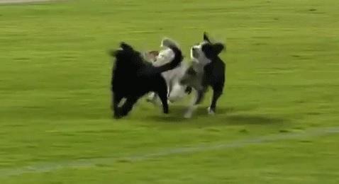Anak Gawang Selamatkan Seekor Anjing dari Amarah Pemain